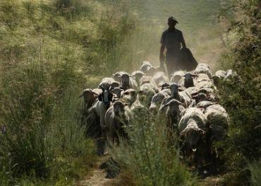 history of human and sheepskin